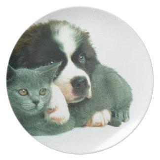 Saint bernard puppy and cat melamine plate