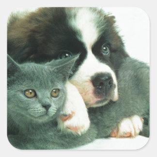Saint bernard puppy and cat square sticker