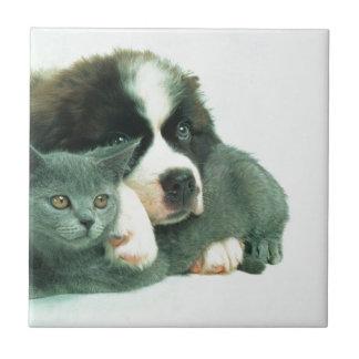 Saint bernard puppy and cat ceramic tile