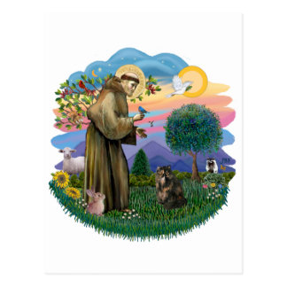 Saint Francis - Persian Tortie cat Postcard