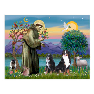 Saint Francis - Two Bernese Mountain Dogs Postcard
