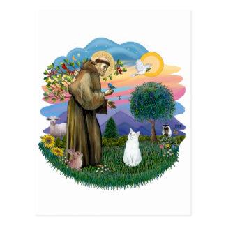 Saint Francis - White Cat (American SH) Postcard