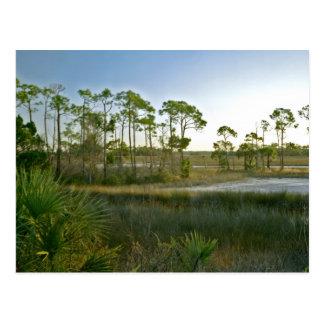 Saint Marks N.W.R., Florida. Postcard