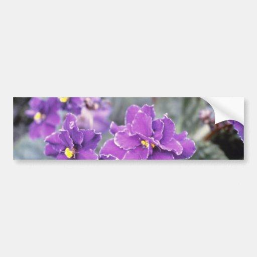 "Saintpaulia ""Sr. Chips"" de la lavanda (violeta afr Etiqueta De Parachoque"