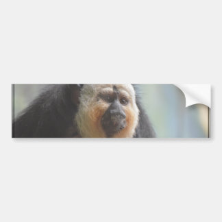Saki Monkey Bumper Sticker