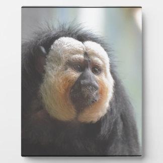 Saki Monkey Plaque