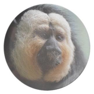Saki Monkey Plate