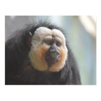Saki Monkey Postcard