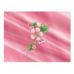 Sakura Blossoms Postcard