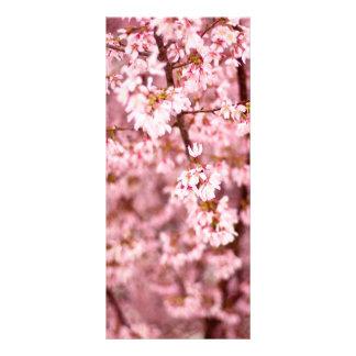 Sakura Cherry Blossom Rack Card