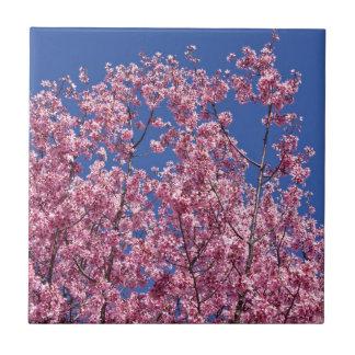 Sakura Cherry Blossoms Into The Blue Tile