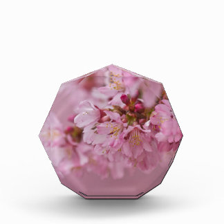 Sakura Cherry Blossoms Pale Pink Reflections Acrylic Award