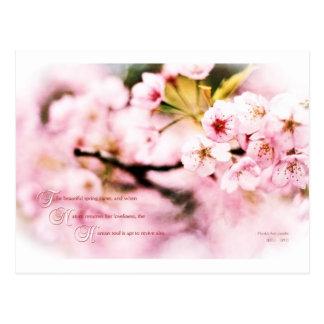 Sakura Cherry Blossoms Spring Nature Loveliness Postcard