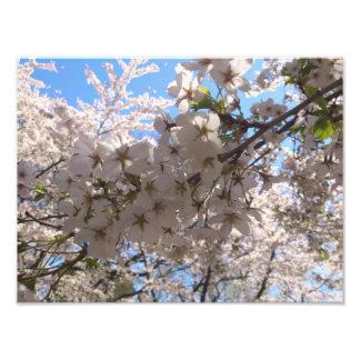 Sakura Close Up Photographic Print