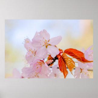 Sakura - flor de cerezo japonesa póster