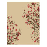 Sakura - flor de cerezo tarjetas postales