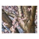 Sakura - flor de la primavera plantillas de membrete
