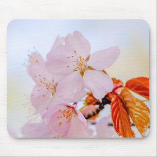 Sakura - Japanese cherry blossom Mouse Pad