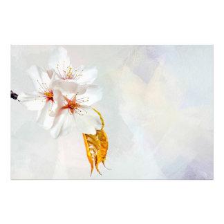 Sakura - Japanese cherry blossom Photo Print