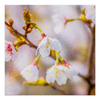 Sakura - Japanese Cherry Blossom Poster