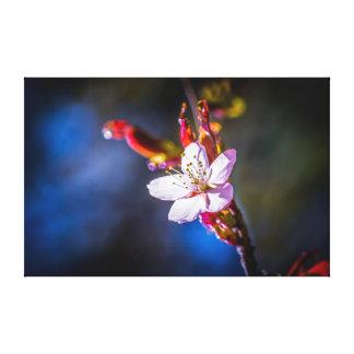 Sakura - Japanese cherry flower Canvas Print