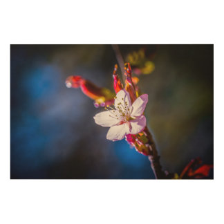 Sakura - Japanese cherry flower Wood Print