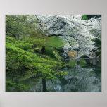 Sakura, jardín del Koraku-en de Koishikawa, Tokio, Impresiones