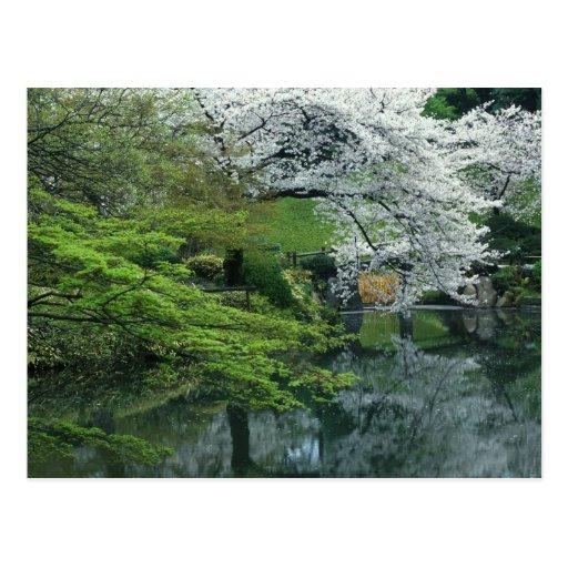 Sakura, jardín del Koraku-en de Koishikawa, Tokio, Postal