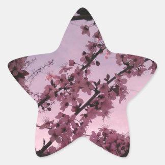 Sakura.jpg Star Sticker
