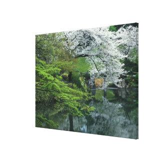 Sakura, Koishikawa Koraku-en Garden, Tokyo, Canvas Print