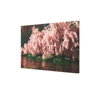 Sakura Lona Envuelta Para Galerias