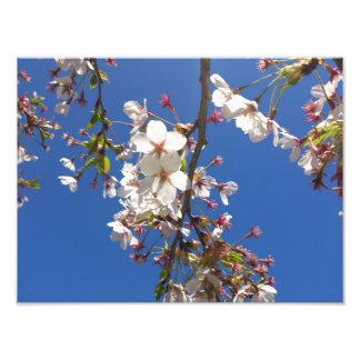 Sakura Photograph