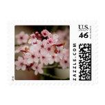 Sakura Stamp