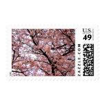 Sakura Tenjou (un toldo de flores de cerezo) Envio