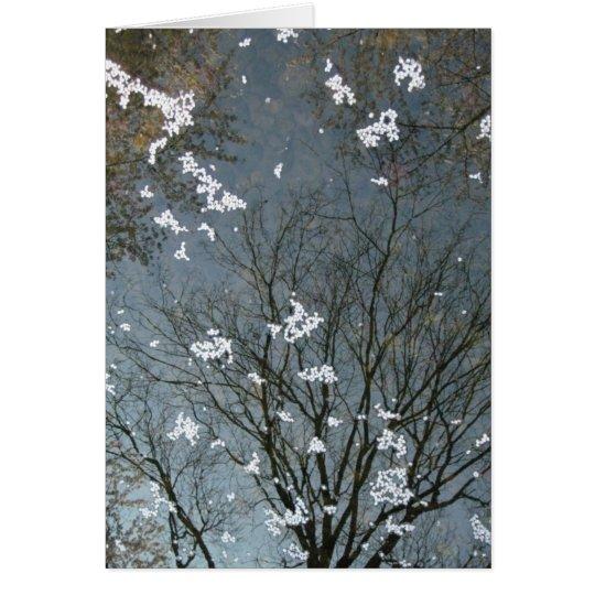 Sakura Tree Reflection-NY Card