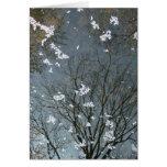 Sakura Tree Reflection-NY Greeting Cards