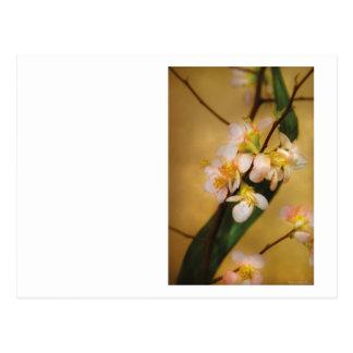 Sakura - un tacto de la primavera tarjetas postales