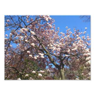 Sakura Watch Photo Art