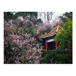 Sakura XXVII Postal