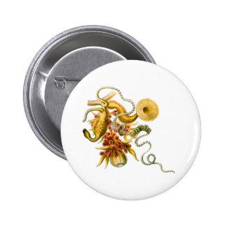 Salacella Pinback Button
