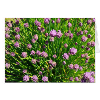 Salad Onion Blooming with Purple Blossoms Cards