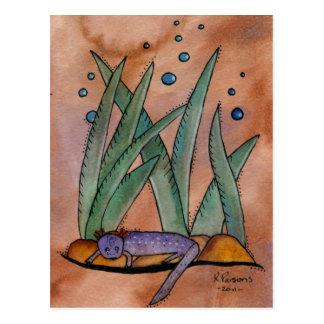 Salamander de Barton Springs Postales