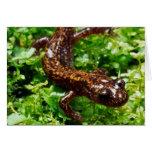 Salamander de Hakone Tarjeta