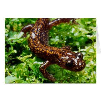 Salamander de Hakone Tarjeta De Felicitación