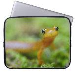 Salamander de Longtail Fundas Portátiles