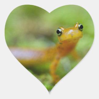 Salamander de Longtail Calcomanía Corazón Personalizadas