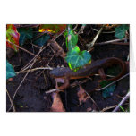 Salamander que explora el mundo tarjetón