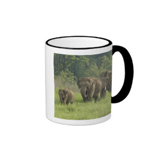 Salida de la familia del elefante indio tazas