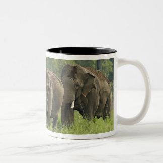 Salida de la familia del elefante indio tazas de café