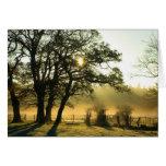 Salida del sol a través de árboles en una mañana b tarjeton